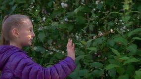 Den gulliga flickan promenerar lila trädblomningbuskar stock video