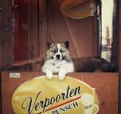 Den gulliga hunden ser från stången av jul marknadsför arkivfoton