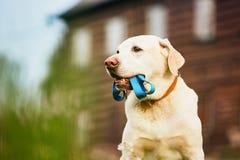 Den gulliga hunden som väntar på, går royaltyfri foto