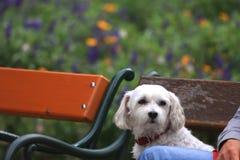 Den gulliga hunden tycker om parkerabänken Arkivbilder