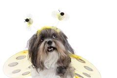 Den gulliga hunduppklädden gillar ett bi Arkivfoto
