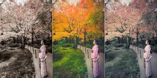 Den gulliga japanska flickan står i stillhet i höstvildmarkländer Arkivbild
