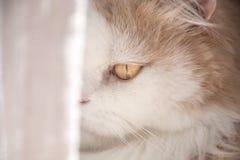 Den gulliga katten royaltyfria foton