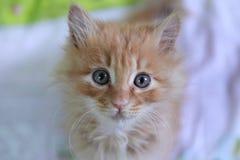Den gulliga katten behandla som ett barn Arkivbilder