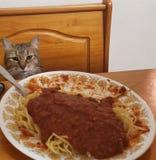 Den gulliga katten har spagetti f?r matst?lle royaltyfri fotografi