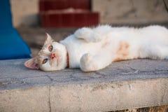 Den gulliga katten ligger på en sten Arkivfoto