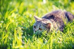 Den gulliga katten ligger på den gröna gräsmattan arkivbilder
