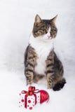Den gulliga katten med gåvaasken och hristmas klumpa ihop sig på vit päls Royaltyfri Bild