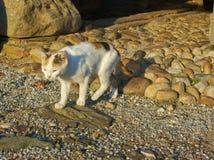 Den gulliga katten med tricolor päls promenerar vägen till trädgården royaltyfri fotografi