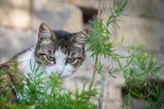Den gulliga katten ser till och med den gröna växten royaltyfri fotografi