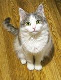 Den gulliga katten sitter på ett golvhem Royaltyfri Fotografi