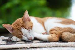 Den gulliga katten sover på matta Royaltyfri Bild
