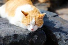 Den gulliga katten tar en ta sig en tupplur på Lanzarote svartstenar royaltyfri bild