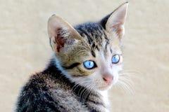 Den gulliga katten vände hans huvud Arkivfoto