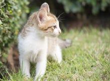 Den gulliga kattungen går i trädgård royaltyfri foto