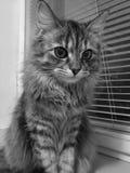 Den gulliga kattungen med stora ögon sitter på den vita fönsterfönsterbrädan royaltyfria bilder