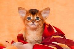 Den gulliga kattungen med stort gå i ax Royaltyfri Bild