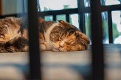 Den gulliga kattungen som sover på vaggan royaltyfri bild