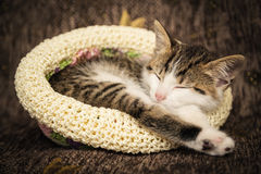 Den gulliga kattungen sover i en hatt Royaltyfri Bild
