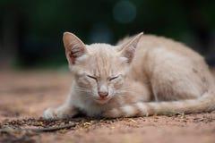 Den gulliga kattungen sover på jordningen arkivbilder