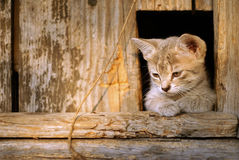 Den gulliga ledsna kattungen sitter royaltyfria bilder