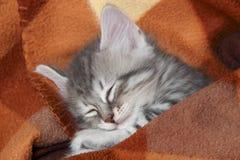 Den gulliga lilla gråa kattungen sover i en varm filt royaltyfri foto