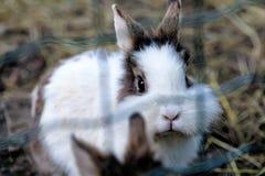 Den gulliga lilla kaninen caged utomhus tätt upp abstrakt bakgrund - Royaltyfria Bilder