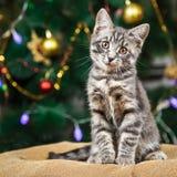 Den gulliga lilla strimmig kattkattungen sitter se kameran på en festlig bakgrund Royaltyfri Fotografi