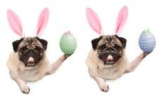 Den gulliga mopsvalphunden med kaninen gå i ax diademen, det hållande övre easter ägget som hänger med, tafsar på tomt baner royaltyfri fotografi