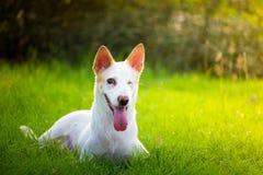 Den gulliga rörelsehindrade hunden i trädgården Royaltyfria Foton