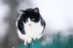 Den gulliga roliga inhemska kattungen sitter på ett trästaket i byn i trädgården under ett snöfall och blickar in i avståndet royaltyfria bilder