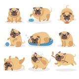 Den gulliga roliga mopshunduppsättningen, hund i olikt poserar och illustrationer för lägetecknad filmvektorn royaltyfri illustrationer