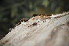 Den gulliga sländan sitter i ett träd arkivbild