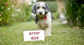 Den gulliga svartvita adoptiv- hunden Royaltyfri Bild