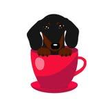 Den gulliga taxhunden i den röda tekoppen, illustrationen, uppsättningen för behandla som ett barn mode Royaltyfri Fotografi