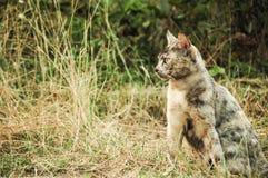 Den gulliga tillfälliga katten är i min villege som är nordlig i Thailand Fotografering för Bildbyråer