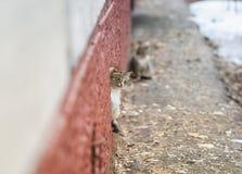 Den gulliga tillfälliga katten ser försiktigt ut ur källaren royaltyfri bild