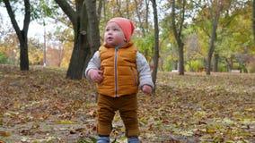 Den gulliga ungen står på stupad gul lövverk i en höst parkerar, lycklig barndom utomhus stock video