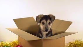 Den gulliga valpen sitter i brevskickandeask med garneringar för jul och för det nya året Royaltyfri Foto