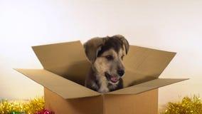 Den gulliga valpen sitter i brevskickandeask med garneringar för jul och för det nya året Royaltyfria Foton