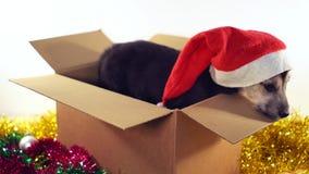 Den gulliga valpen sitter i gåvaask med garneringar för jul och för det nya året Arkivfoto