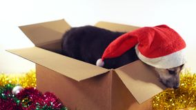 Den gulliga valpen sitter i gåvaask med garneringar för jul och för det nya året Royaltyfria Foton