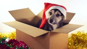 Den gulliga valpen sitter i gåvaask med garneringar för jul och för det nya året Royaltyfria Bilder