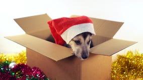 Den gulliga valpen sitter i gåvaask med garneringar för jul och för det nya året Fotografering för Bildbyråer