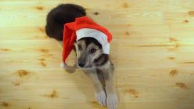 Den gulliga valphunden i jultomtenhatt ligger på trägolvet Royaltyfria Bilder