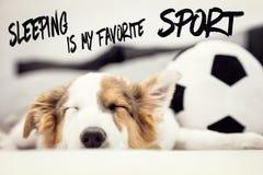 Den gulliga valphunden och en fotbollboll, engelskt sova för text är min favorit- sport arkivbilder