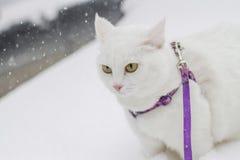 Den gulliga vita fluffiga katten går i den insnöade naturen Royaltyfria Foton