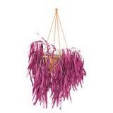 Den hängande krukan med den rosa violeten lämnar isolerat Arkivbilder