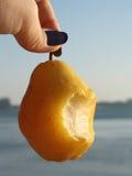 Den hängande pearen kan du äta Fotografering för Bildbyråer