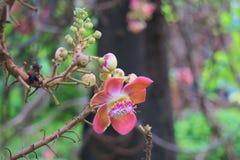 Den härlig, ovanlig, myra-täckt, för persikan, för rosa färger, för för den guling och vit blomman klungan som blommar i en tropi royaltyfri foto